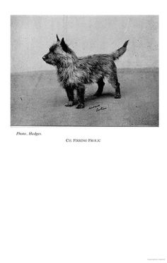The Cairn Terrier - A Complete Anthology of the Dog -