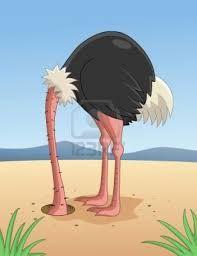 ostrich head in sand - Google Search
