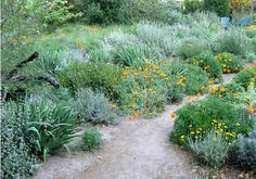 Repetition of beautiful plants and a natural dirt path