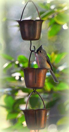 Bird watching - Tufted Titmouse