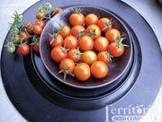 Sungold tomatoes were 2011's fave mini tomato