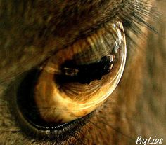 Eye of a mountain goat by Spangles44, via Flickr