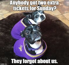 Our Frenchies are kind of disappointed they don't get to go to the first regular season home game at US Bank Stadium - looking forward to seeing the Vikes pound the Packers!  #SkolVikings