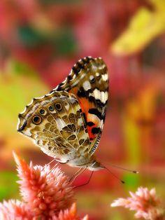 ~~Butterfly Grotto by kibishipaul~~