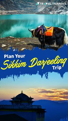 Plan your sikkim darjeeling tour Holiday Packages, Darjeeling, Trip Planning, Tours, How To Plan, Movie Posters, Darjeeling Tea, Film Poster, Billboard