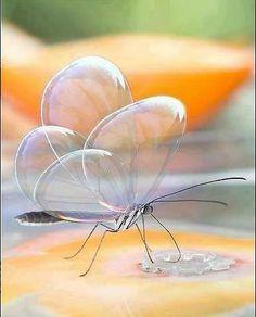 Foto: Mariposa transparente, una increíble creación de la naturaleza.
