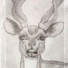 Realistic deer (720×720)