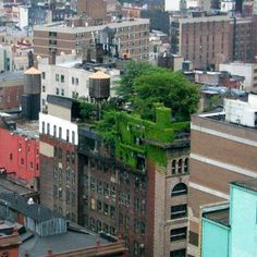 Some ideas are very promising to help us in mitigating climate change and among them are green roofs and walls.    Planting grass or trees like in Manhattan (cf. picture) on top of buildings have many advantages as it decreases the air pollution, the local temperature of cities and greenhouse gases emissions and so on. Read More: http://www.edouardstenger.com/2007/11/02/green-roofs-and-walls-a-brilliant-idea/