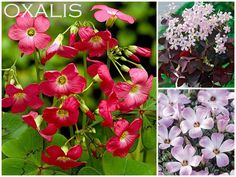 Ten Bulbs to Plant in the Spring for Summer Garden Color {Container Bulb Choices} - bystephanielynn