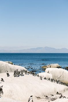 Boulders Beach, Cape Town, Things to do in Cape Town, must see in Cape Town - Top Trends Boulder City Nevada, Boulder Beach, Boulder Garden, Boulder Rock, Boulder Colorado, Camps Bay Cape Town, Beach Trip, Beach Travel, South Afrika