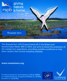 £4 GBP - Rspb Pin Badge | Roseate Tern |Solent & Sw Spa Roseate Tern Life Project [01276] #ebay #Collectibles Royal Society, Southampton, Pin Badges, Habitats, Conditioner, Spa, British, Jewellery, Water