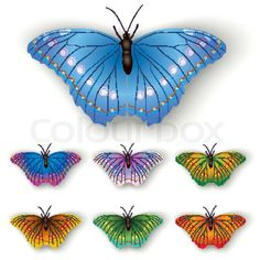 2012681-color-butterflies-isolated-on-a-white-background.jpg (800×800)