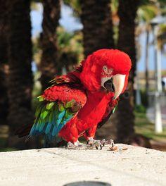Parrots, Solar, Medium, Exotic Birds, Animales, Pets, Medium-length Hairstyle, Parrot