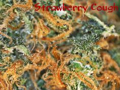 Strawberry Cough!
