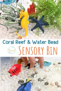 This coral reef sensory bin includes fun ocean animals and plants along with water beads for engaging sensory play for kids. Sensory Tubs, Sensory Activities Toddlers, Sensory Boxes, Sensory Play, Sensory Therapy, Creative Curriculum Preschool, Kindergarten Activities, Coral Reef Craft, Discovery Day