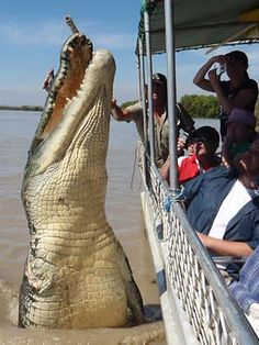 This should take you to the video of Brutus, and his nemesis, Barabas who is even bigger.  http://www.dailytelegraph.com.au/travel/australia/brutus-a-monster-croc-not-a-crock/story-e6frezii-1226094375720