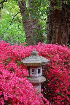 Bremen: Rhododendron Park   No Apathy Allowed #Bremen #Germany #botanical