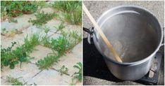 Jak si poradit se všemi odrůdami plevele včetně těch nejzákeřnějších. S trvalým účinkem, rychle a bez chemie Destiel, Pergola, Canning, Chemistry, Outdoor Pergola, Home Canning, Conservation