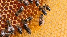 Sa Defenza: Oltre alle api, i pesticidi neonicotinoidi uccidon...