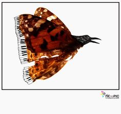 Pic to Pic: Let's fly #fotografiailustrada #ilustracion #illustration #photography #pictopic #butterfly #piano #poetry #mariposa #poesia #bird #fly #volar #pajaro