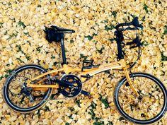 Copyright © ぽんたろう 様 / 2012年式ViscP18改 / 銀杏の絨毯が見事でしたので、マンゴーオレンジのViscと同化させてみました。