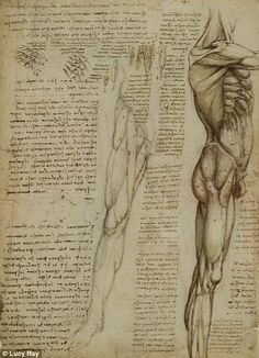 New exhibition at Buckingham Palace demonstrates how Leonardo da Vinci was also one of the most ground-breaking anatomists of all time