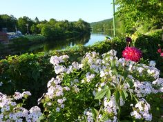 A visit to the amazing Bridge of Flowers in Shelburne Falls, Massachusetts http://visitingnewengland.com/blog-cheap-travel/?p=253
