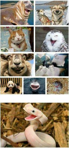 Happy animals