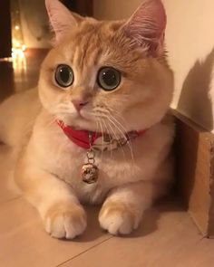 Funny Animals memes and pics Cute Cats And Kittens, I Love Cats, Crazy Cats, Kittens Cutest, Pretty Cats, Beautiful Cats, Animals Beautiful, Cute Funny Animals, Cute Baby Animals
