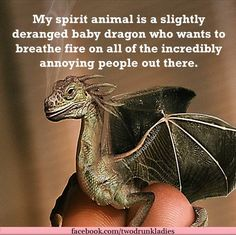 Baby Dragons are the best! Magical Creatures, Fantasy Creatures, Dragon Quotes, Funny Memes, Hilarious, Dragon Artwork, Dragon Pictures, Cute Dragons, Fantasy Dragon