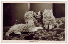 Antique Old Real photo Cat Postcard Kittens [100564] - $7.99 : Old Postcards In Time, Online source for old and antique postcards