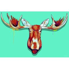 Maxwell Dickson ''Moose Head'' Graphic Art on Canvas