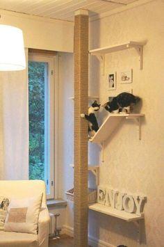 Klimmen en klouteren, plaats een paar plankjes en eventueel een krabpaal waar de kat zich kan uitleven.