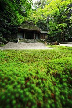 苔 山門 法然院 見事 京都