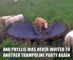 Cute Animals: funny cow - And Phyllis Was Never Invited To Another Trampoline Party Again Funny Shit, Haha Funny, Funny Cute, Funny Memes, Funny Stuff, Funny Things, Nice Things, Odd Stuff, Funny Captions