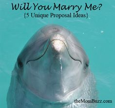 5 Unique Marriage Proposal Ideas, My favorite is the dolphin idea..