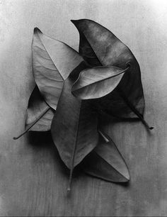 Ann Cutting - Leaves Photography & white and white et blanc und weib e branco y negro Black White Photos, Black And White Photography, Still Life Photography, Art Photography, Photo D Art, Shades Of Black, Monochrome, Sketches, Painting