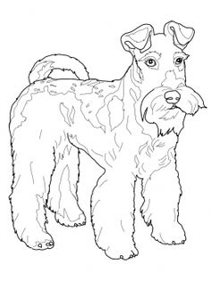 Wire Fox Terrier Coloring Page From Dogs Category Select 27237 Printable Crafts Of Cartoons Nature Animals Bible And Many More