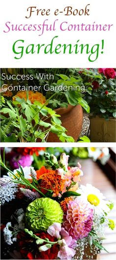 FREE e Book: Successful Container Gardening!