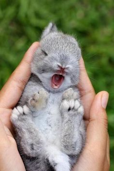 The rabbit of the child who yawns.