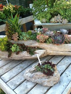 succulent in wood log