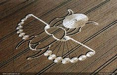 Kephra Beetle, symbol of the sun at midnight held in its claws a symbol of time past.  A crop circle that appeared in East Field, Wiltshire, UK  21 August 2005