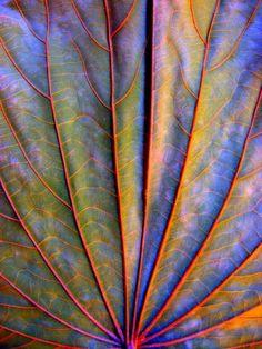 Multicolor Leaf: arina jansen van vuuren