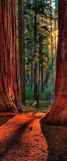 Sequoia Road National Park