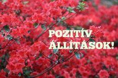 Pozitivnap - A pozitív Hírek oldala - 35 pozitív kijelentés, ami után másképp tekintesz az életedre Stronger Than Yesterday, Change My Life, Positive Vibes, Karma, Destiny, Mantra, Motivational Quotes, Health Fitness, Spirituality