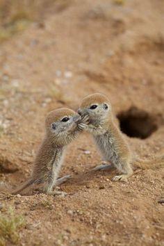 #adorable #cute #animals