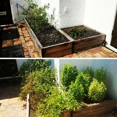 Just a month and a half after overhauling and this bed is full of herbs is…
