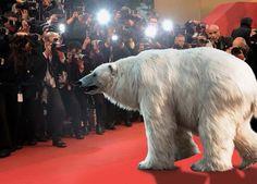 Travel Pictures, Travel Photos, Miami Wedding, World Traveler, Polar Bear, Event Design, Tourism, Animals, Red Carpet