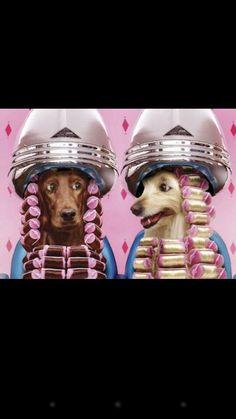 Bull Terrier Inglés silueta Cookie Cuttertratar Perro Galleta Cumpleaños De Rescate