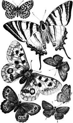 Free Digital Stamp - Butterflies Lots of sweet butterflies for your projects! Butterfly clip art images in different colors. Butterfly Clip Art, White Butterfly, Vintage Butterfly, Paper Butterflies, Beautiful Butterflies, Digital Stamps Free, Borboleta Tattoo, Gravure Illustration, Images Vintage